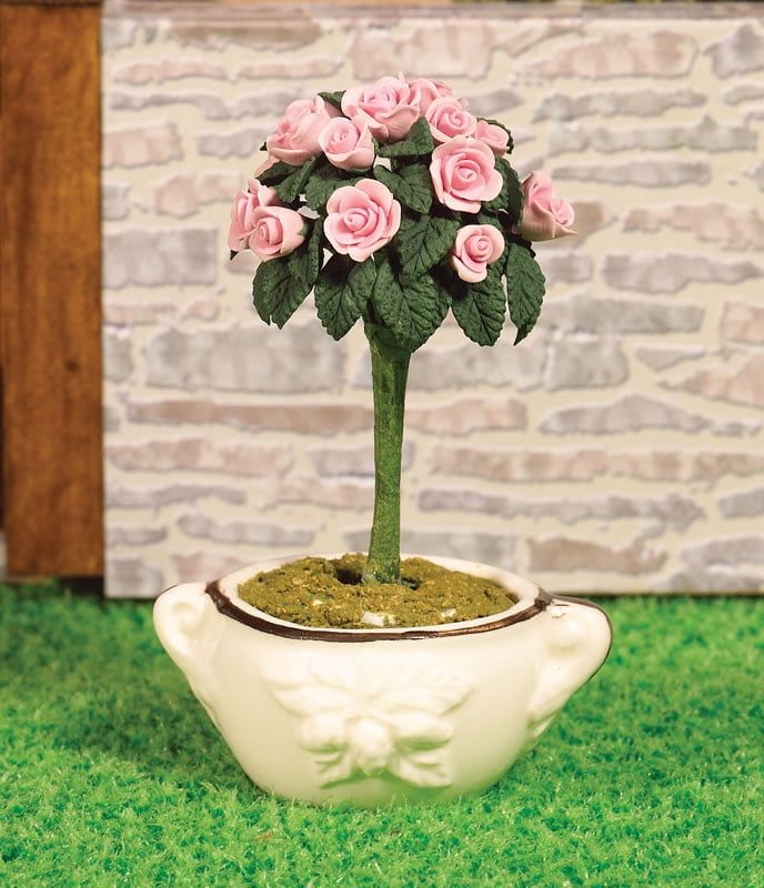 Garden Rose in Pot
