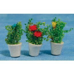 Pots of Flowers x 3