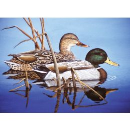 Painting By Numbers Blue Water Mallards