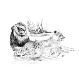 Sketching Made Easy Lion Pride